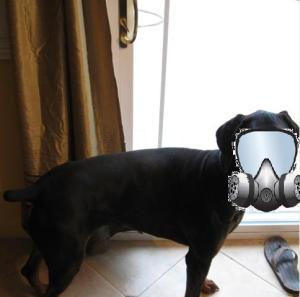 hazmat puppy