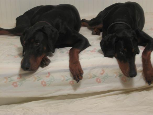 dog bed 038