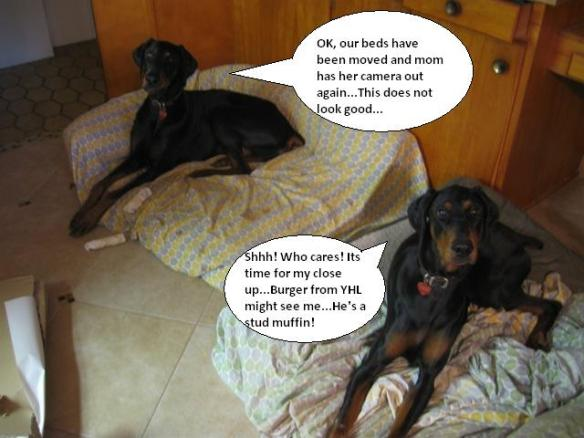 dog bed joke