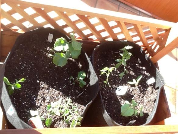 rolling garden cart baby plants 2