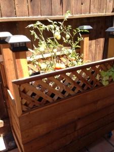 rolling garden cart baby plants 4