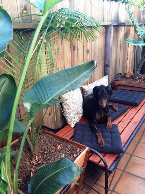 antique cot meditation bench platform outdoor dog bed 019
