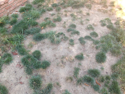dog-urine-kills-grass-how-to-landscape-a-small-backyard-for-dogs-.jpg