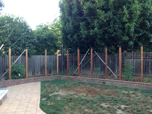 before-pic-small-california-backyard-transformation-water-wise-dog-proof.jpg