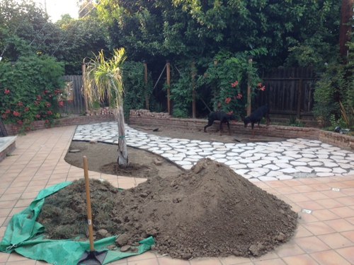 beginning-the-drought-tolerant-garden.jpg