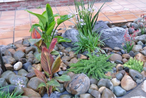 canas-bird-of-paradise-lilly-of-the-nile-succulant-groundcover-kangaroo-paw-westringia-fruticosa-coast-rosemary.jpg