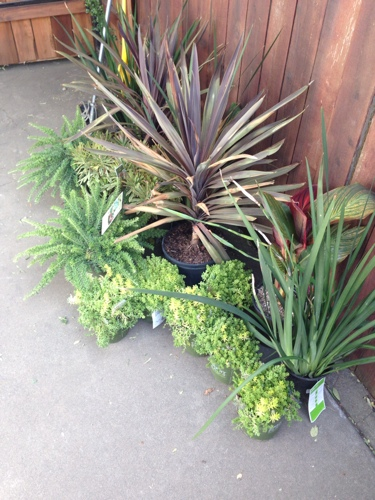home-depot-smart-planet-drought-tolerant-plants.jpg