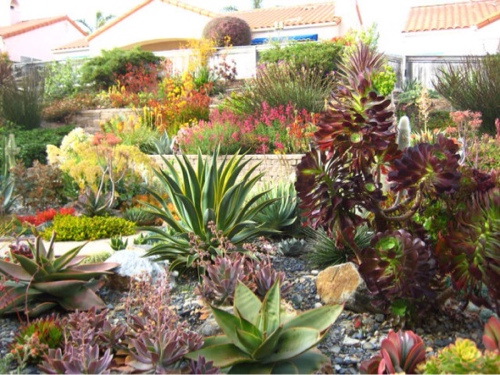 lush-and-beautiful-drought-tolerant-garden.jpg