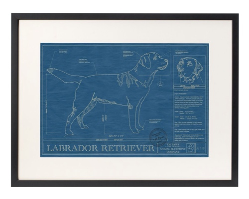 framed-blue-print-of-dog.jpg